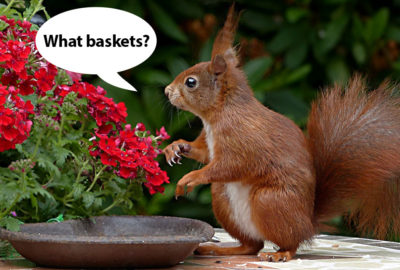Squirrel on Table | Old Metairie Garden Club
